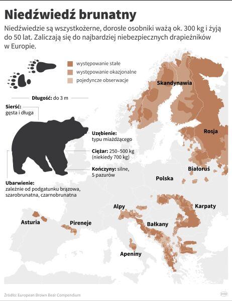 Występowanie niedźwiedzia brunatnego (Maciej Zieliński/PAP)