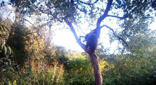 Niedźwiadek postanowił spróbować jabłek