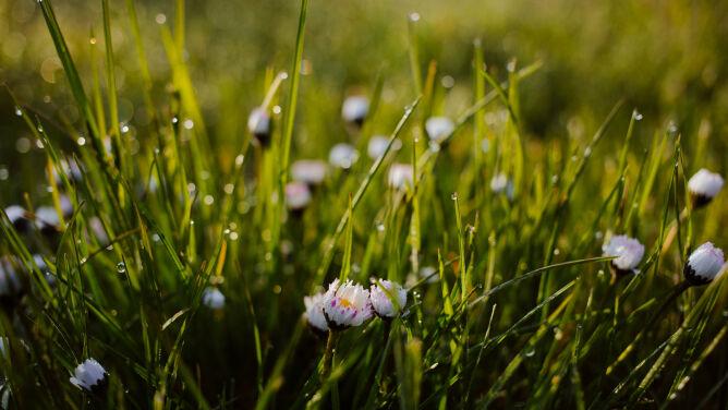 """Wiosna przepędzi """"lato"""". Kolejne dni będą chłodniejsze i mokre"""