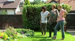 Ogród zamieszkiwany przez psy